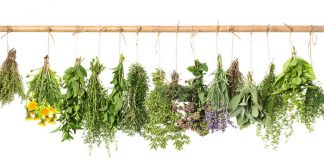 Hanging herbs Easy Food