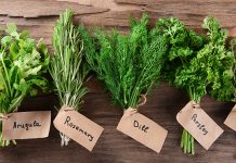 how to keep fresh herbs