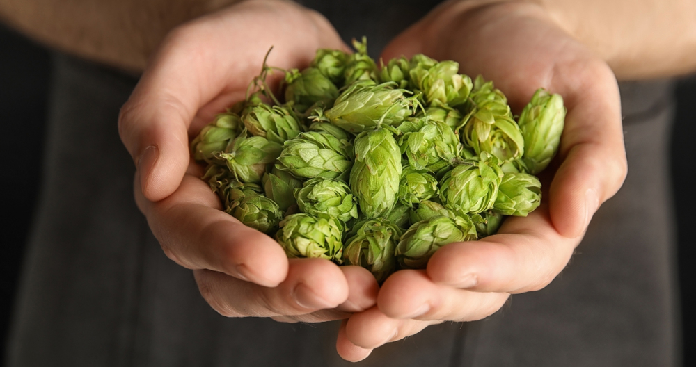 Hops guide to craft beer Easy Food